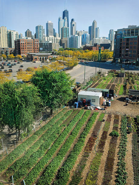 Financing Urban Agriculture A Growing Field Of Possibilities Unc